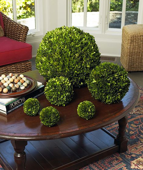 Decorative Boxwood Balls Preserved Boxwood Balls  Restylesource  Spring  Pinterest