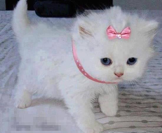 Princess kitty, sweet kitten #cat