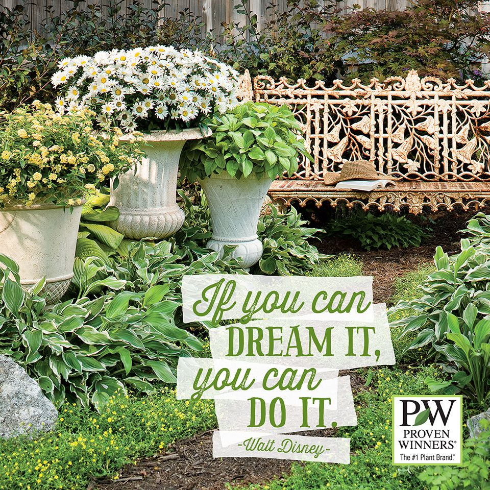 Just Give Your Dream A Try Garden Quotes Garden Quotes Signs