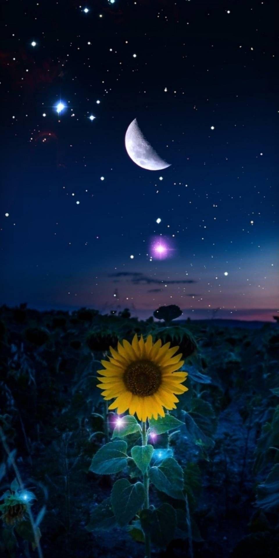 Pin By Renato Ferreira On Wallpaper Starry Night Wallpaper Sunflower Iphone Wallpaper Sunflower Wallpaper
