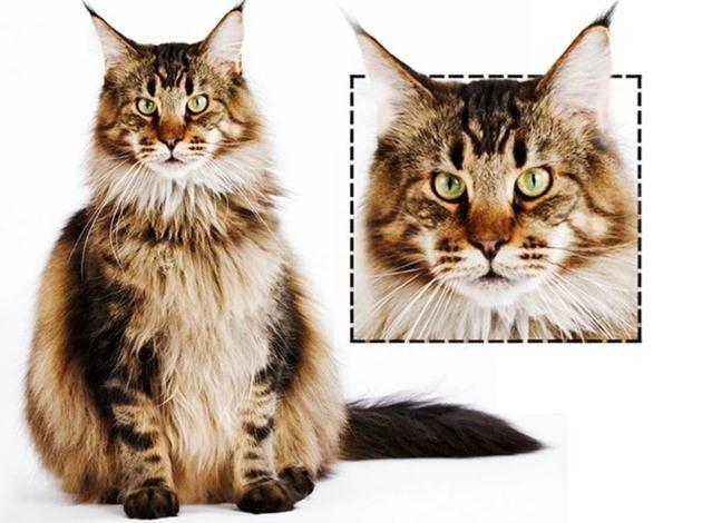 what kind of ur cat?   เมนคูน