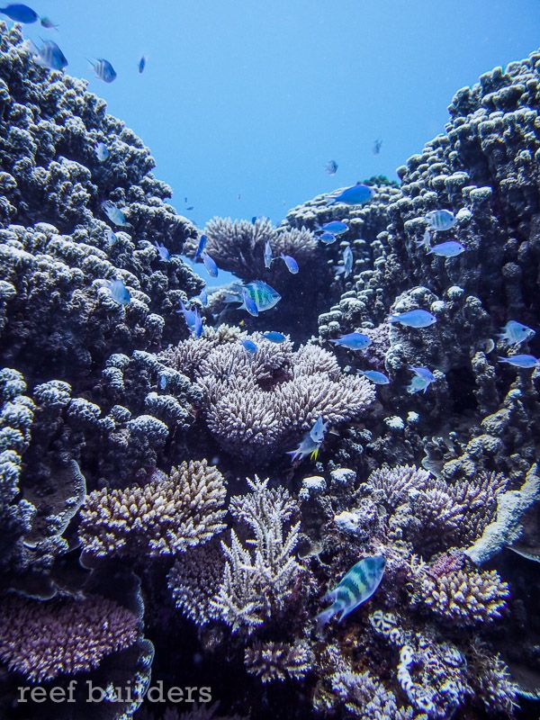 Amazing reef scenes of corals from the