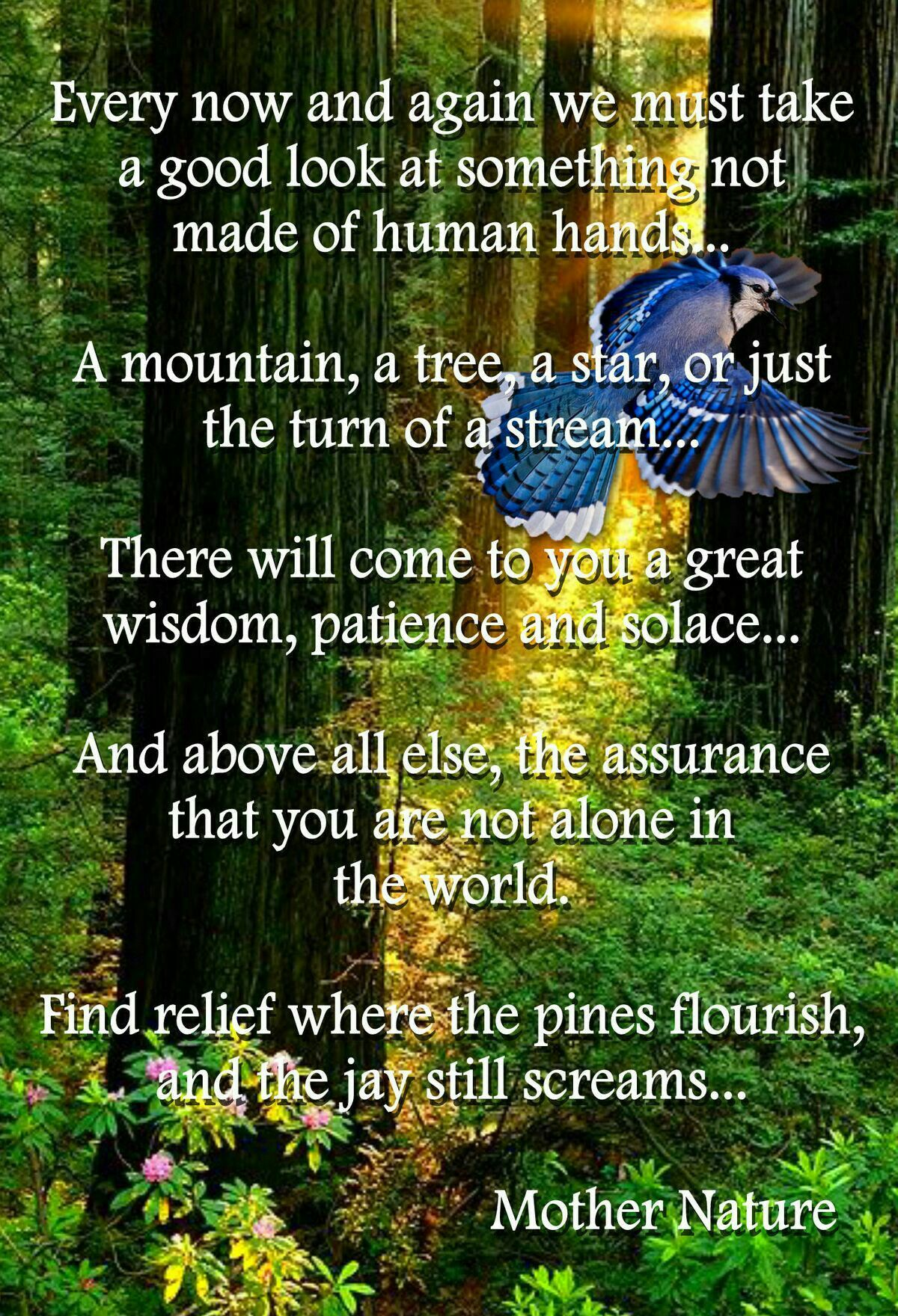 Solace In Nature Inspirational Nature Quotes Quotes Nature