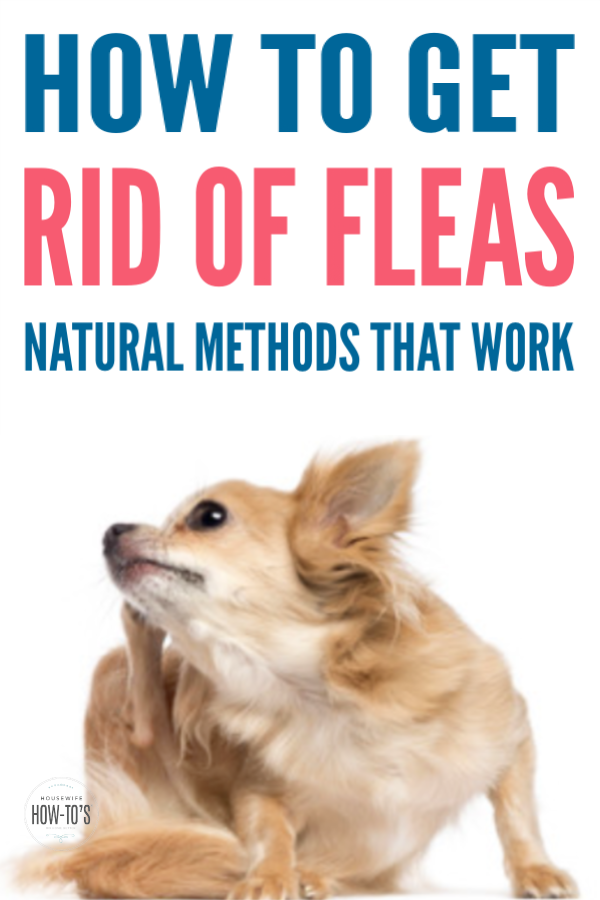 How To Get Rid Of Fleas Naturally Kill Fleas On Dogs Dog Flea Remedies Pet Remedies
