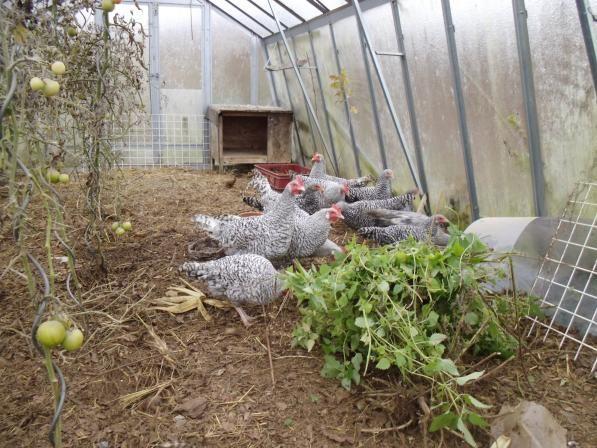 Permakultur Garten anlegen Tipps aus Hannes Permagarten - garten anlegen tipps