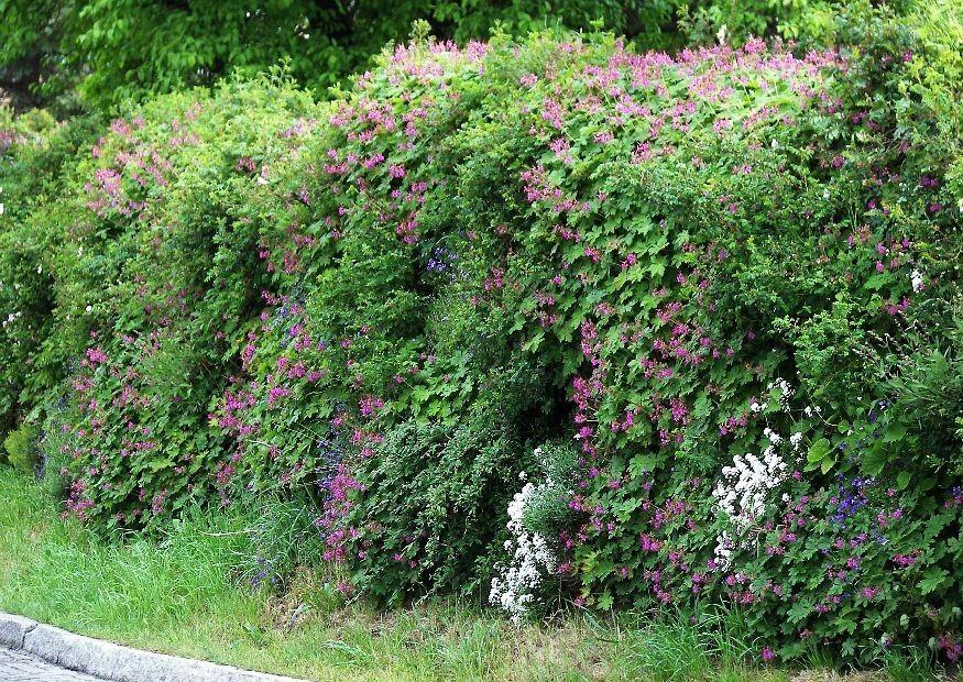 Begrunte Schallschutzmauern Gruner Larmschutzwall Garten