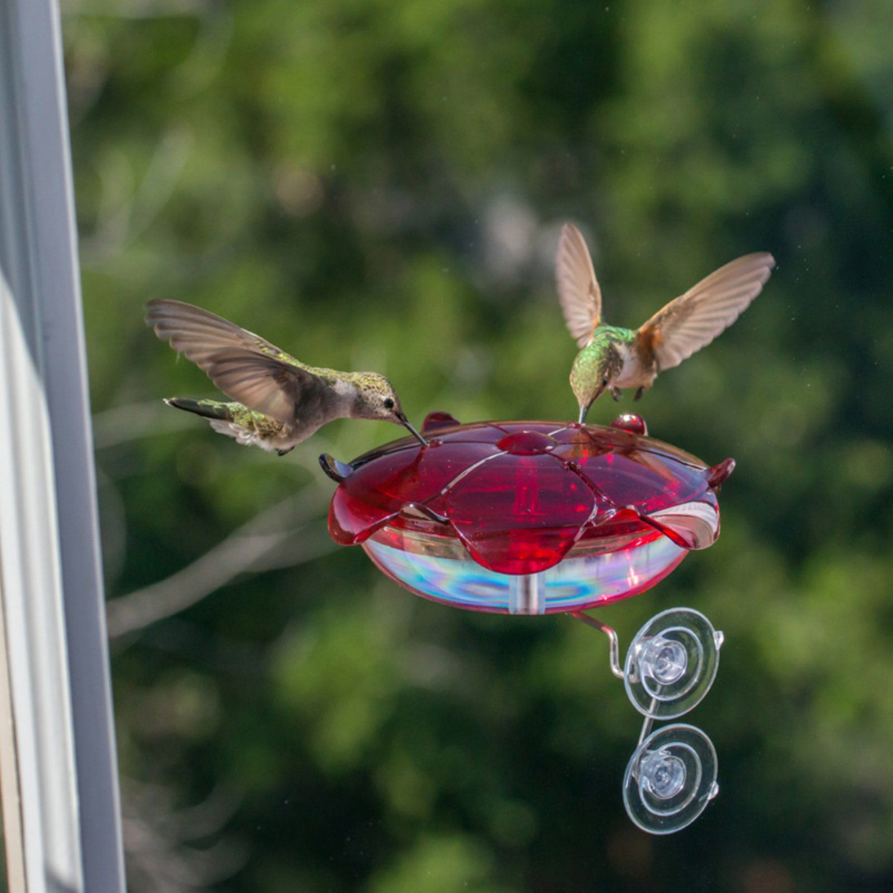 Droll Yankees Clear Ruby Sipper Window Hummingbird Feeder