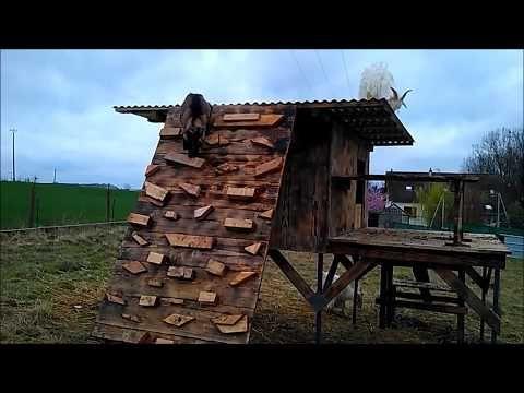Comment construire un abri pour les chèvres #chevres #comment