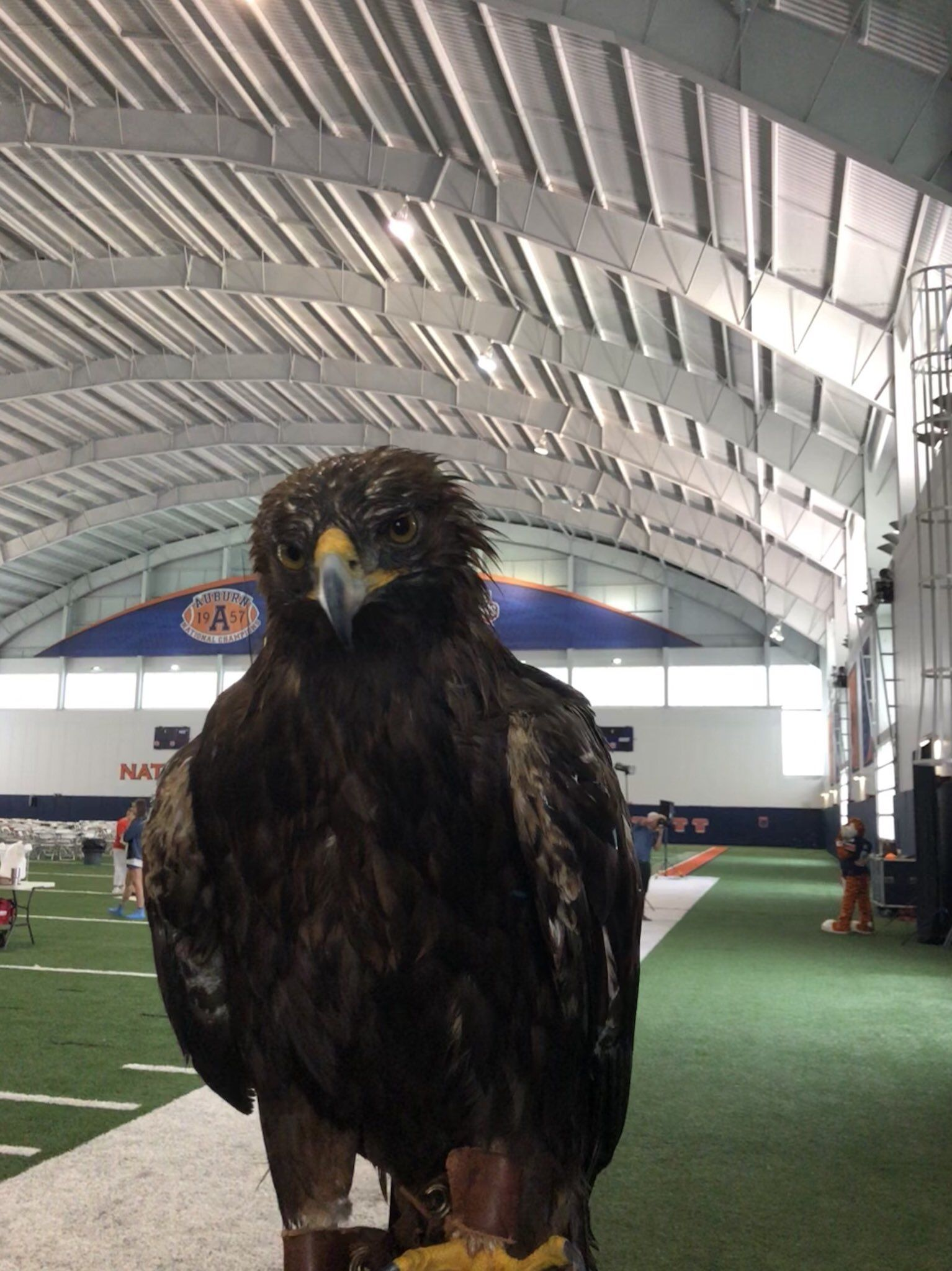 War Eagle Vii On War Eagle Pinterest Eagle And Auburn