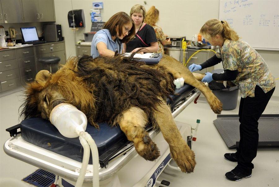 Veterinary students Nicole Bayless, left, and Megan Richards ...