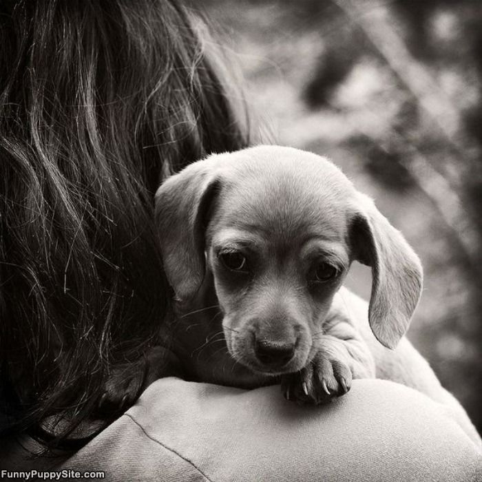 Precious Baby Cute puppies images, Dog logic, Cute puppies