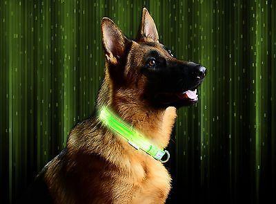 Dog Collars Metal Buckle