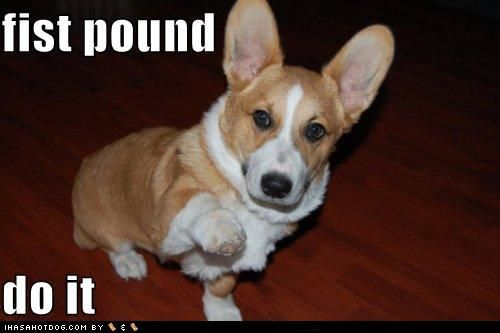Fist Pound Puppy Dog Pictures