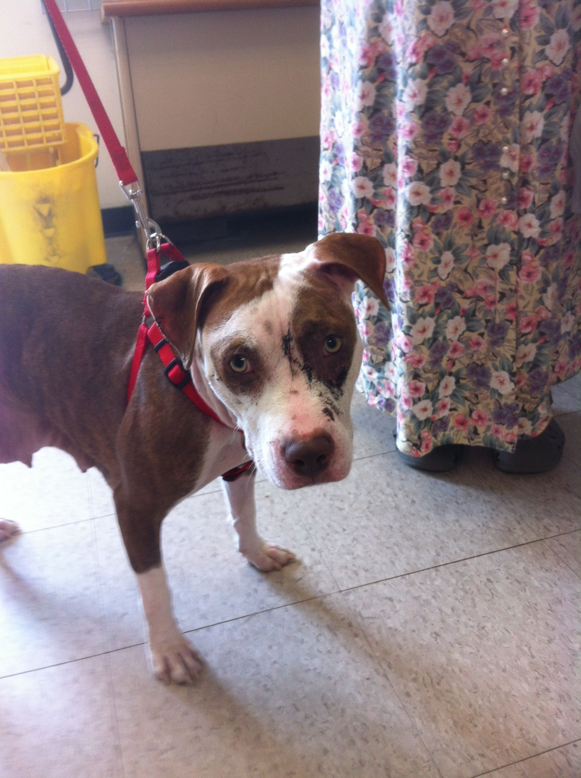 XTRA URGENT!!!!!!!!!! Please Save LOVELY Young Abused