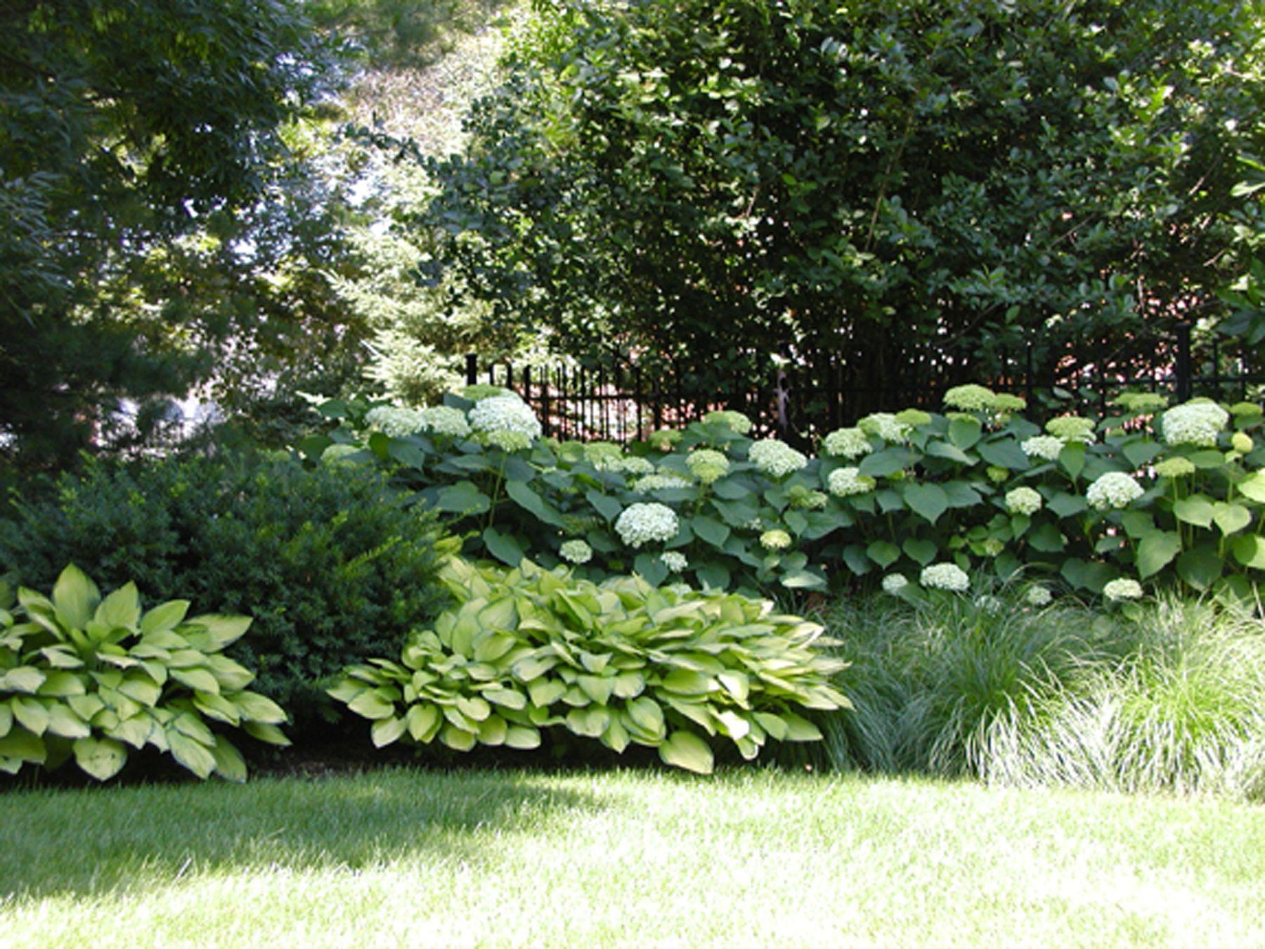 Backyard Landscapes Western Dupage Landscaping Backyard Landscaping Rose Garden Landscape Hydrangea Landscaping