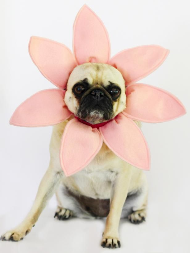 Make A Flower Halloween Costume For A Dog Dog Halloween Costumes