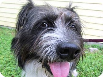 Indianapolis In Tibetan Terrier Corgi Mix Meet Jorge A Dog For Adoption Dog Adoption Pets Corgi Mix