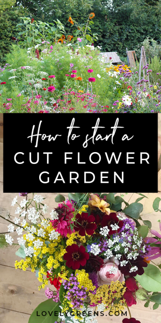 Tips on how to grow a cut flower garden from gardener and florist Helena Willcocks. Includes how to lay out your garden, amending soil, and why you should be growing Chocolate cosmos.