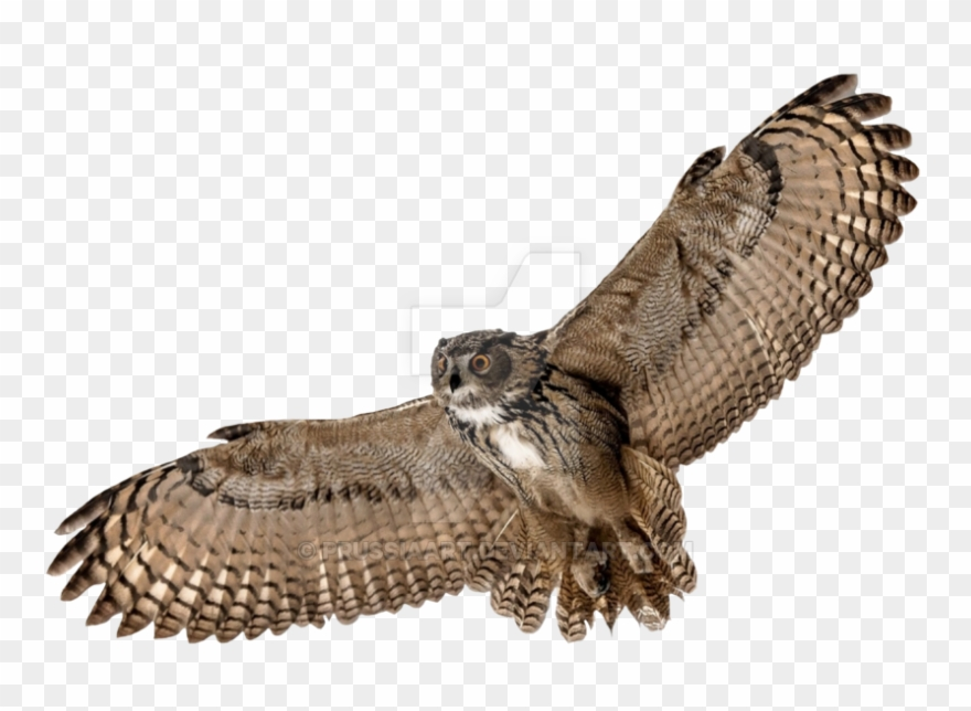 Download Hd Barn Owl Png Picture Flying Owl Transparent Background Clipart And Use The Free Clipart For Your Creative Project Owl Png Owl Background Barn Owl