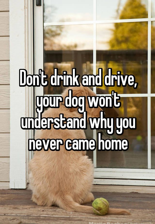 Dont Drink And Drive Your Dog Wont Understand Why You Never Came