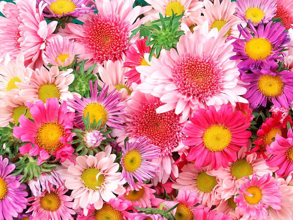 Wonderful Pink White And Yellow Flowers Wallpaper