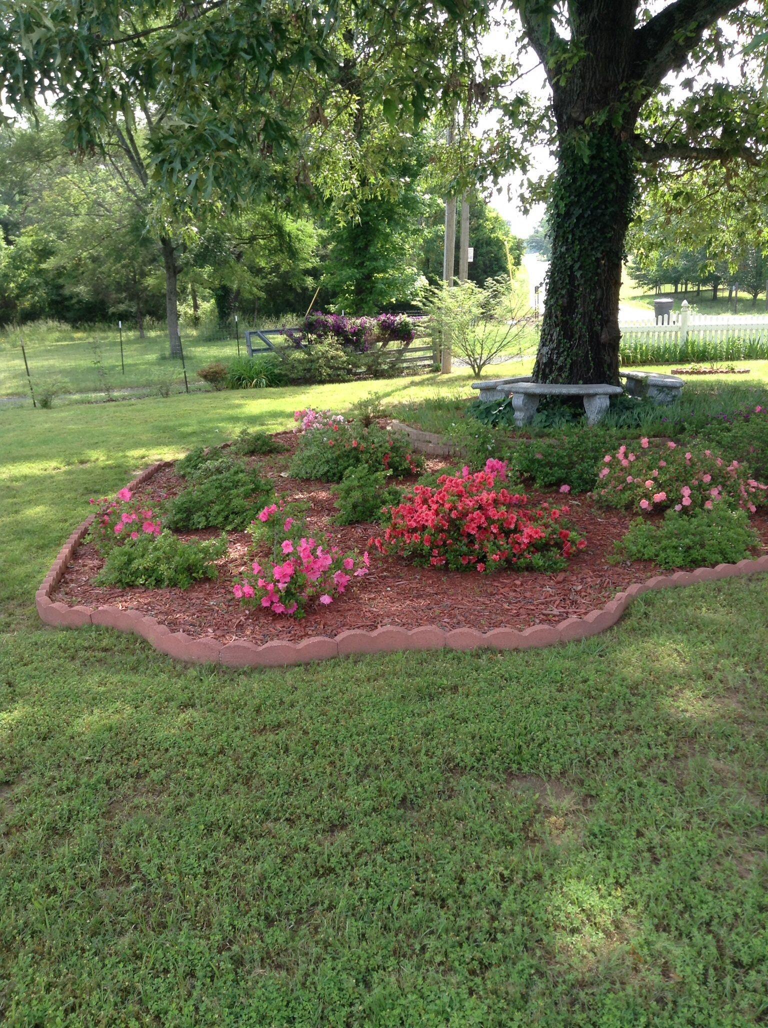 Shade garden under oak tree.   Gardening   Pinterest