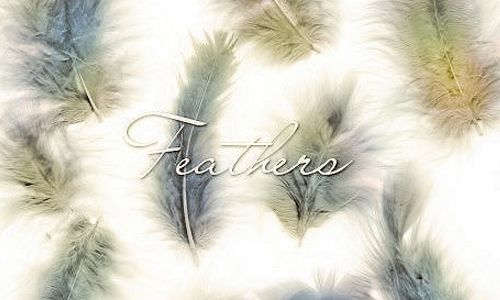 30 Sets Of Soft Feather Brushes With Images Photoshop