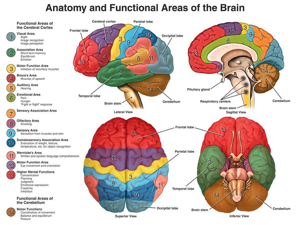 Cosmic Mid Brain Pvt. Ltd. India   Human Factors + Psychology ...