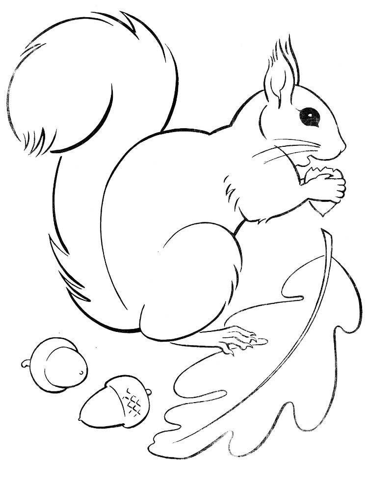 ausmalbilder eichhörnchen zum ausdrucken  best trend design