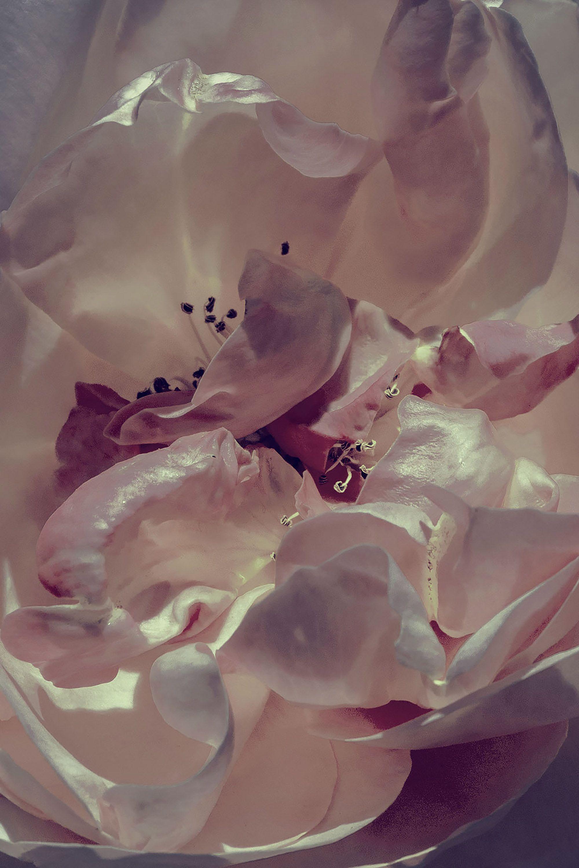 Artist and photographer Xuebing Du's flower photography is