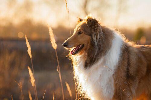 Adottare un cane adulto ...  Quando si prende la decisione di adottare un cane, chi ama gli animali pensa certamente alla possibilità di far feliceun cane abbandonato o proveniente dal canile. Un'iniziativa bellissima: dare finalmente una casa piena di amore ad un animale che ha sofferto è un atto di grande bontà. È anche normale avere dei dubbi, perché adottare …