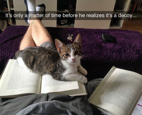 Tastefully Offensive On Tumblr Funny Animal Pictures Cute Funny Animals Funny Cat Memes