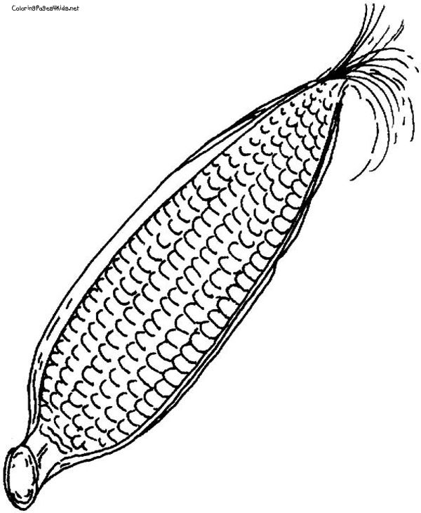 Corn Coloring Page | COLORING PAGES FOR FREE | Pinterest