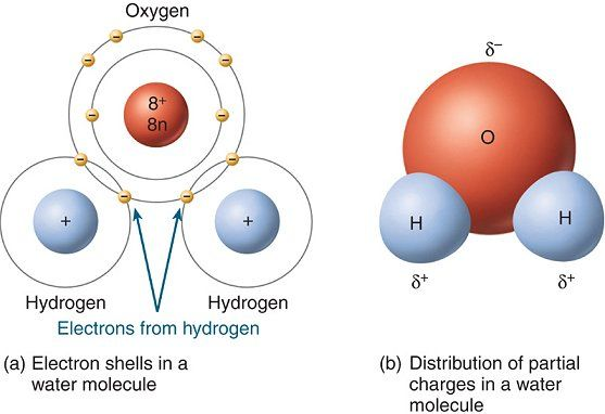A Water molecule consists of two Hydrogen atoms covalently bonded ...