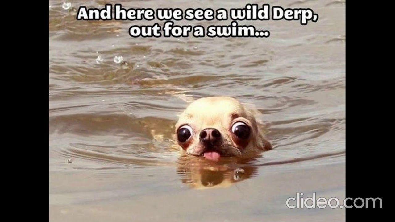 Funny Memes Fun Youtube Funny Animal Memes Funny Animal Pictures Animal Memes