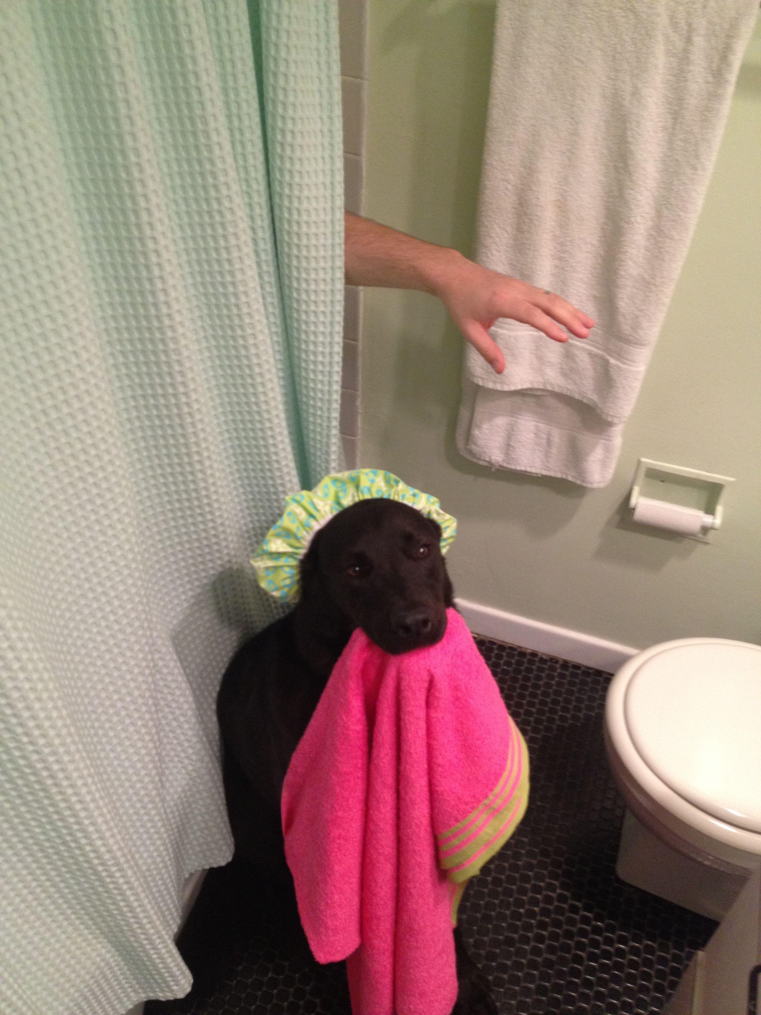Bathroom Attendant Dog Training Dog Training Tips Darwin