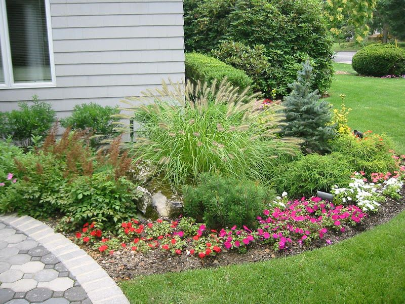 Dwarf Grasses Landscaping Landscape plantings dwarf fountain grass baby blue eyes spruce landscape plantings dwarf fountain grass baby blue eyes spruce mixed annuals and perennials workwithnaturefo