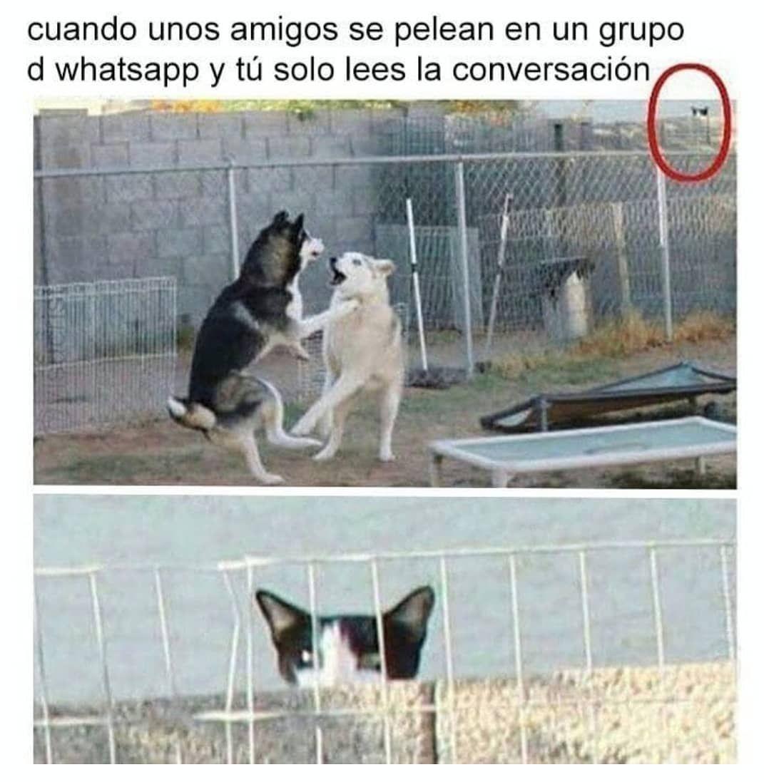 Imagenes De Chistes Memes Chistes Chistesmalos Imagenesgraciosas Humor Memes De Animales Divertidos Meme Divertido Memes Divertidos