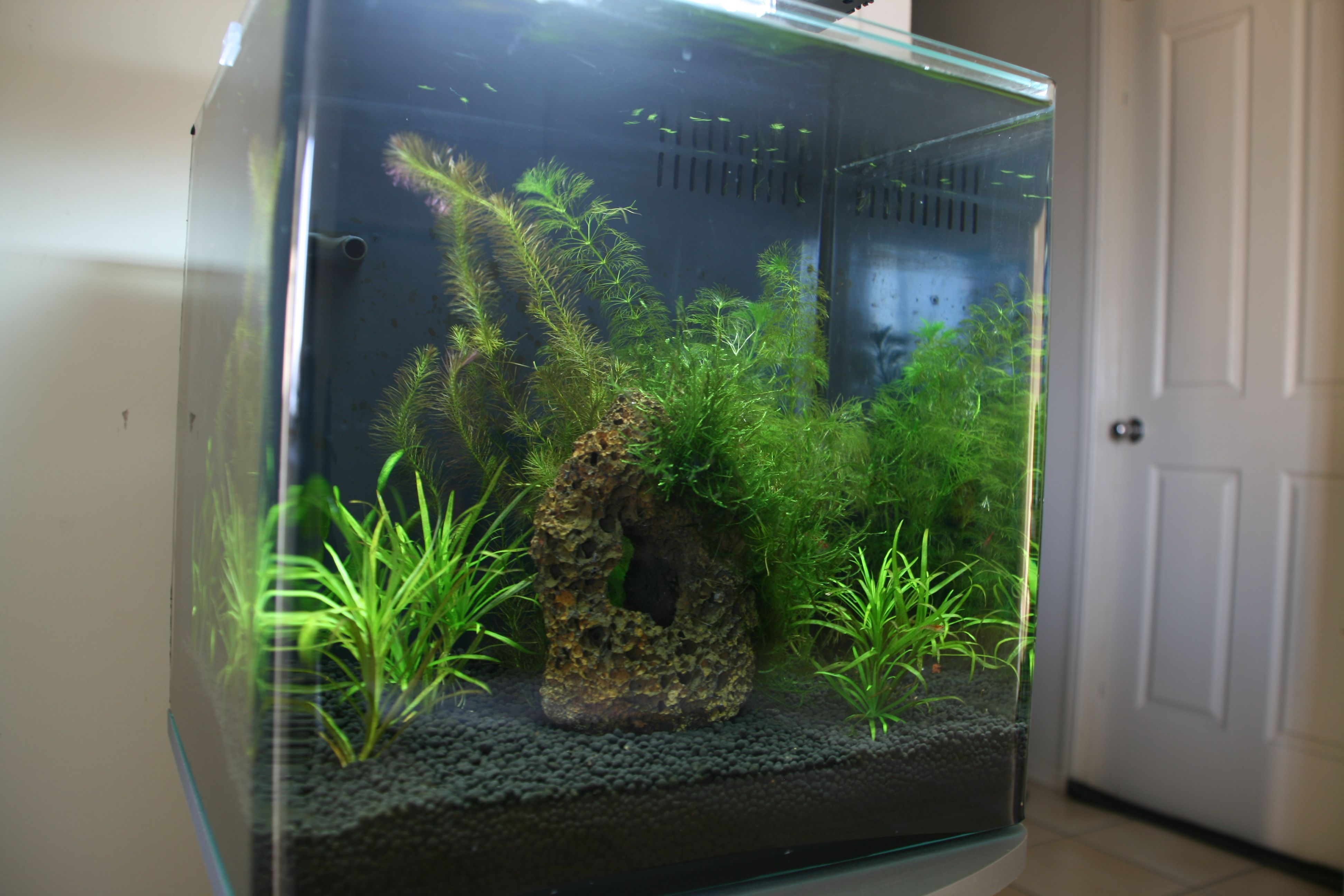 Rearanged plants and added a lava rock withJava Moss tyed to it with
