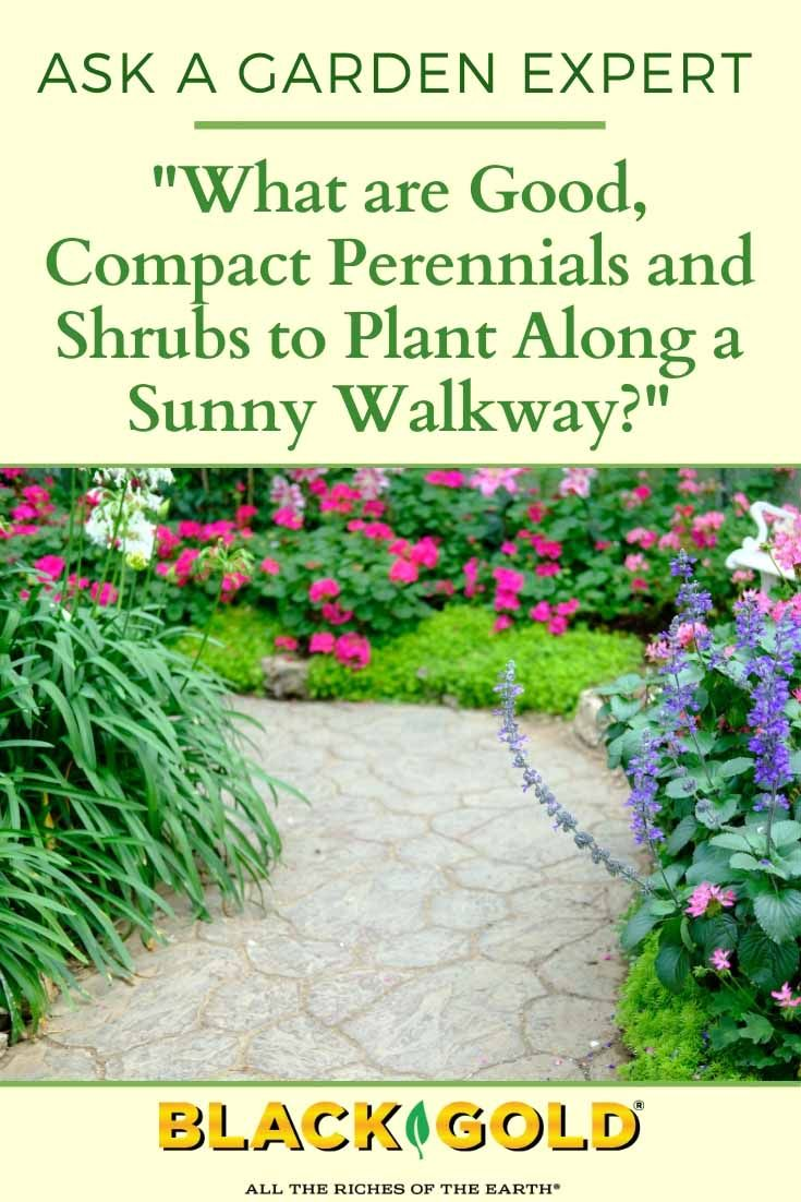 What Are Good Compact Perennials And Shrubs To Plant Along A
