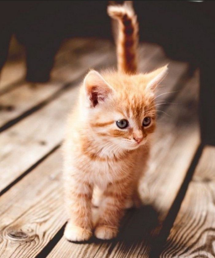 How And When To Let Your Kitten Outside For The First Time Kittens Cutest Cute Cats Cute Fluffy Kittens