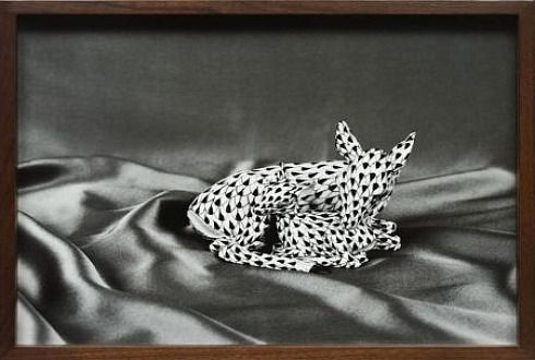 אלעד לסרי מציג תמונות ותצלומים בתערוכות בניו יורק ובסנט לואיס - אמנות - גלריה - עכבר העיר