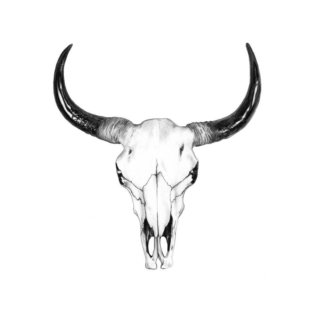 Bull Skull Drawing by John Gordon Art (2015, colored ...
