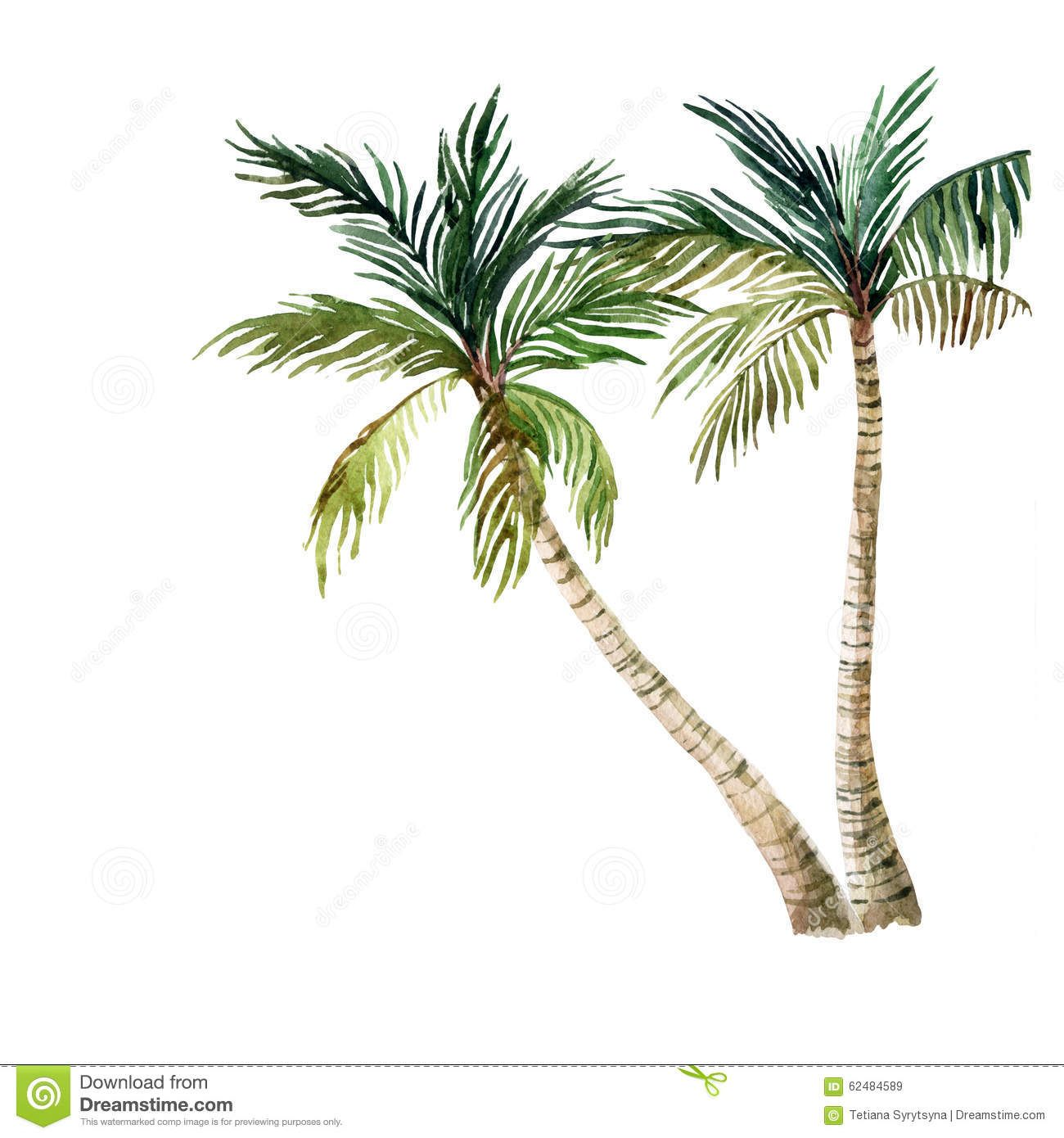 Image result for watercolor palm tree watercolors pinterest watercolor background - Palmier clipart ...