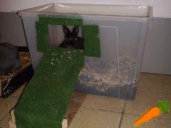m hren sind zwergkaninchen pinterest m hren orange und kaninchen. Black Bedroom Furniture Sets. Home Design Ideas