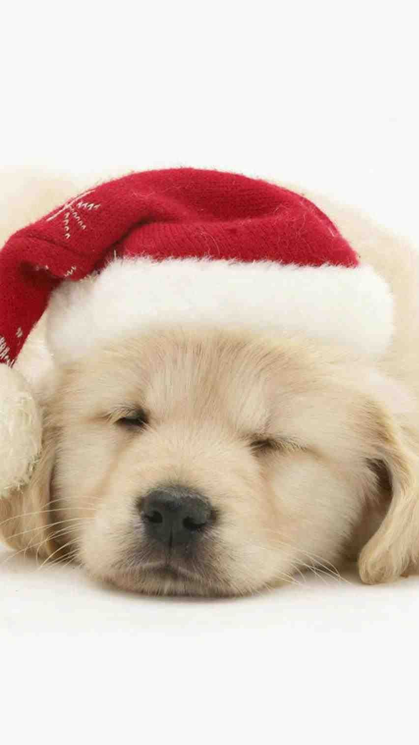 Cute Christmas Background Ipad Puppy Backgrounds Cute Dog Wallpaper Dog Wallpaper Iphone