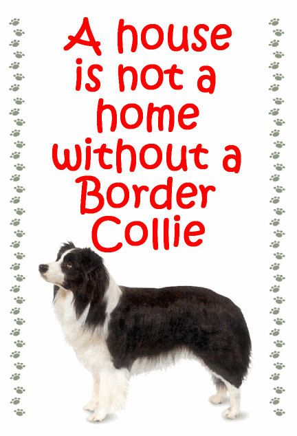 Gifts For Dog Owners Border Collie Fridge Magnet Various