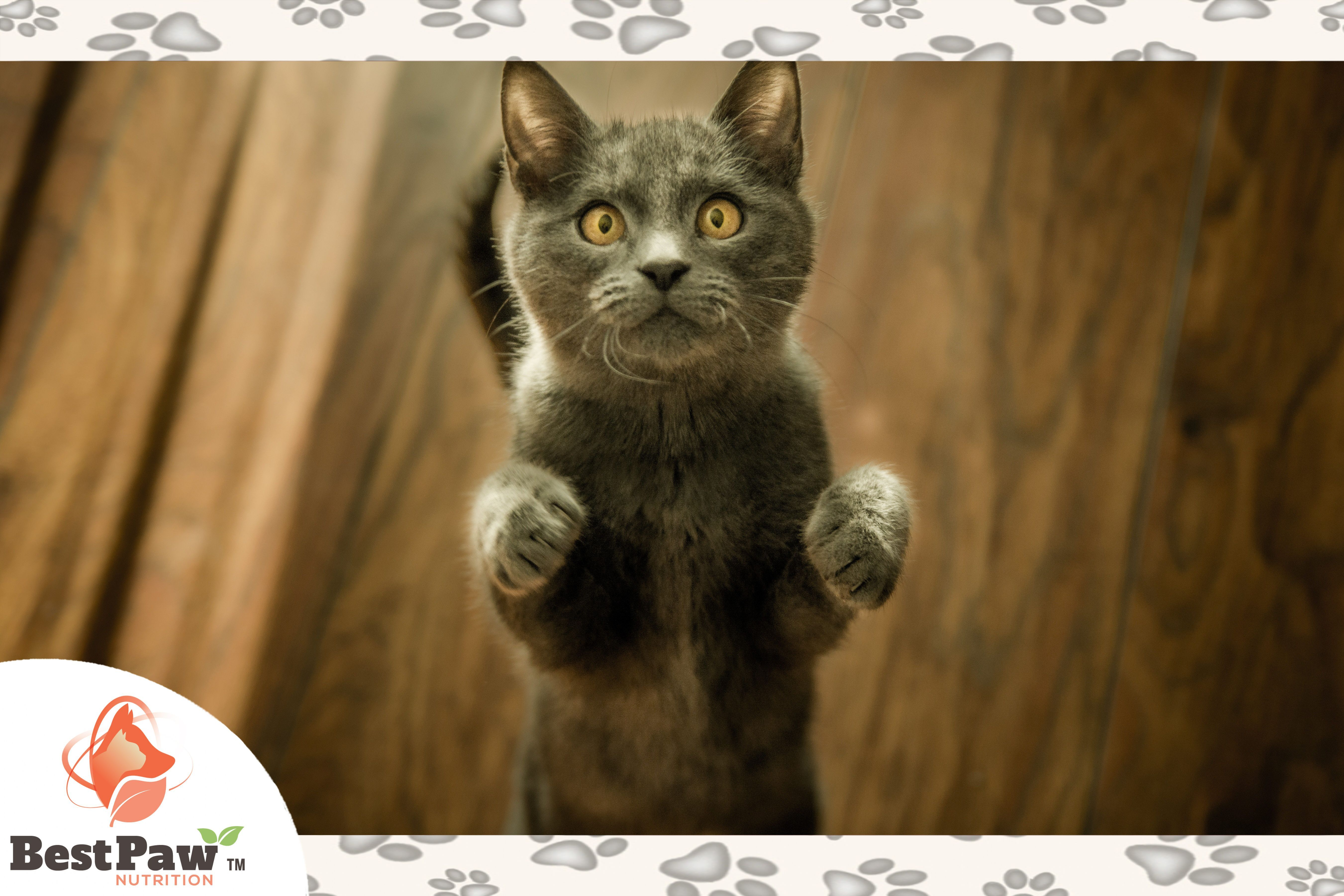 With Such An Adorable Face It S Impossible Not To Just Scoop This Kitty Right Up And Give It All The Love Lovecats Ad Funny Cats Cat Lovers Cat Stands