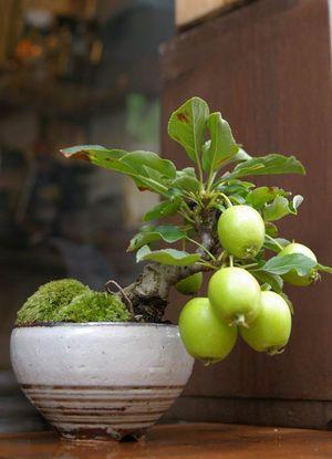 画像 : 【ミニ盆栽】かわいらしい!実もの盆栽の世界 - NAVER まとめ