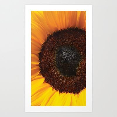 Sunflower Art Print by Anne Staub - $19.76